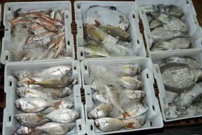 Можно ли заморозить охлажденную рыбу