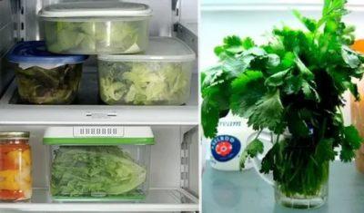 Как хранить зелень в холодильнике свежей