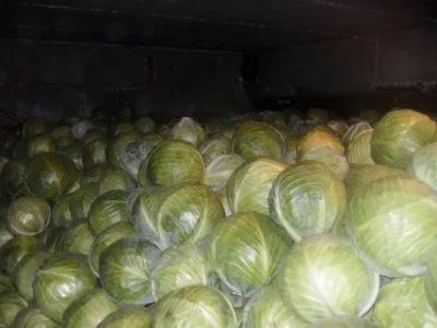 Можно ли замораживать свежую белокочанную капусту