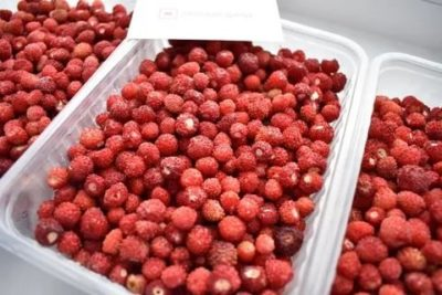 Как заморозить лесные ягоды