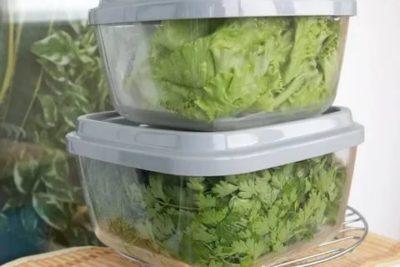 Как правильно хранить свежую зелень в холодильнике