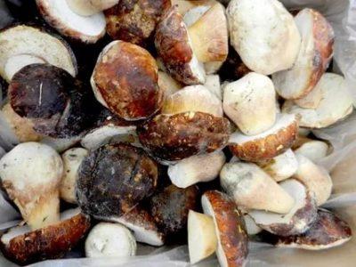 Можно ли заморозить белые грибы