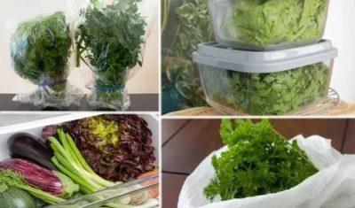 Как правильно хранить зелень в холодильнике