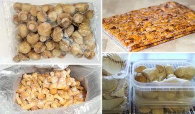 Сколько можно хранить в морозилке вареные грибы