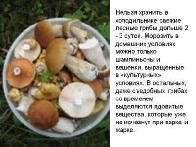 Сколько можно хранить свежие белые грибы в морозилке