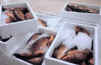Как сохранить свежую рыбу без заморозки