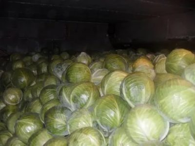 Можно ли заморозить раннюю капусту