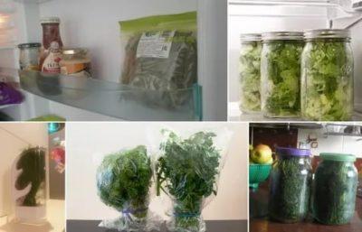 Как сохранить свежий укроп в холодильнике
