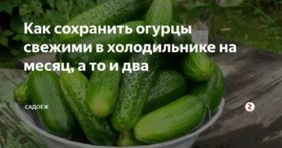 Сколько хранятся свежие огурцы в холодильнике