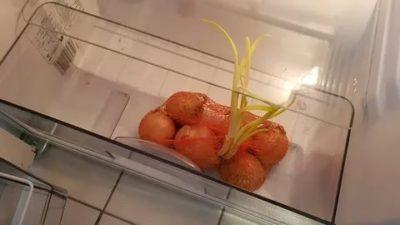 Как хранить лук и чеснок в холодильнике