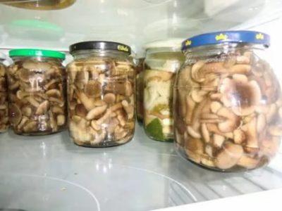 Сколько можно хранить соленые грибы в холодильнике