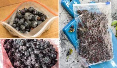 Как заморозить чернику с сахаром на зиму