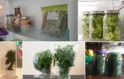Как долго хранить зелень в холодильнике