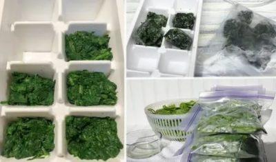Сколько можно хранить шпинат в холодильнике