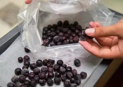 Как хранить чернику в морозилке