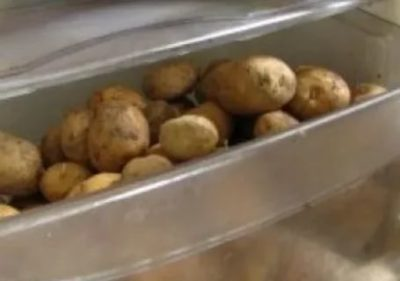 Как долго можно хранить вареную картошку в холодильнике